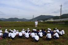 南中山小学校の子供達が大豆の収穫をしました_e0061225_9273210.jpg
