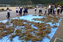 南中山小学校の子供達が大豆の収穫をしました_e0061225_930116.jpg