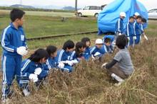 服間小学校の子供達が大豆の収穫をしました_e0061225_9391254.jpg