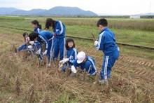 服間小学校の子供達が大豆の収穫をしました_e0061225_9411134.jpg