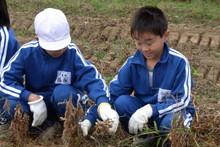 服間小学校の子供達が大豆の収穫をしました_e0061225_9412455.jpg