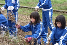 服間小学校の子供達が大豆の収穫をしました_e0061225_9413670.jpg