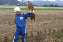 服間小学校の子供達が大豆の収穫をしました_e0061225_9421767.jpg
