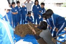 服間小学校の子供達が大豆の収穫をしました_e0061225_9482714.jpg