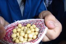服間小学校の子供達が大豆の収穫をしました_e0061225_9502749.jpg
