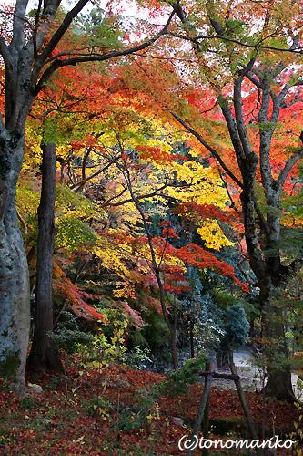 紅葉の有馬温泉へ_c0024345_15433487.jpg