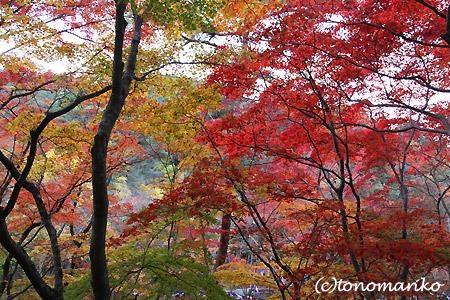 紅葉の有馬温泉へ_c0024345_1543423.jpg
