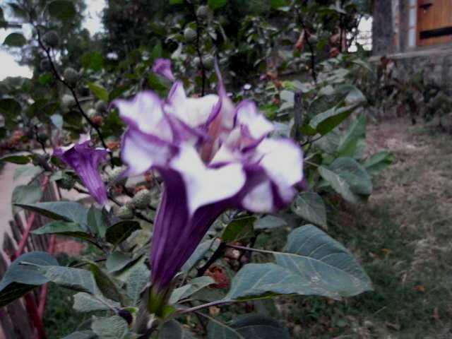 エチオピア(23) アルバミンチ、パラダイス・ロッジの朝_c0011649_0183897.jpg