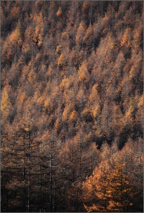 秋も終り_d0101050_16362958.jpg