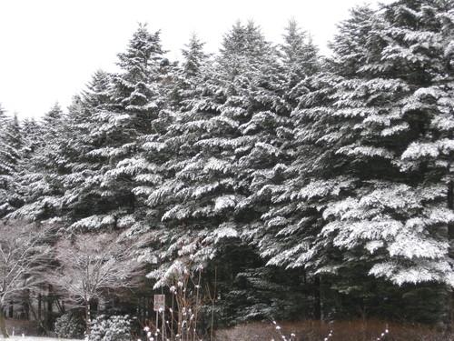 クリスマス気分↑ ↑_f0236260_2127456.jpg