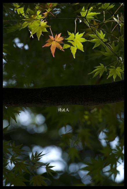 f0146161_8125269.jpg