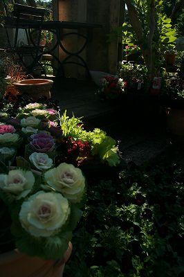 朝の光をあびてうれしそうなアナーセンの花たち_b0137969_1814954.jpg