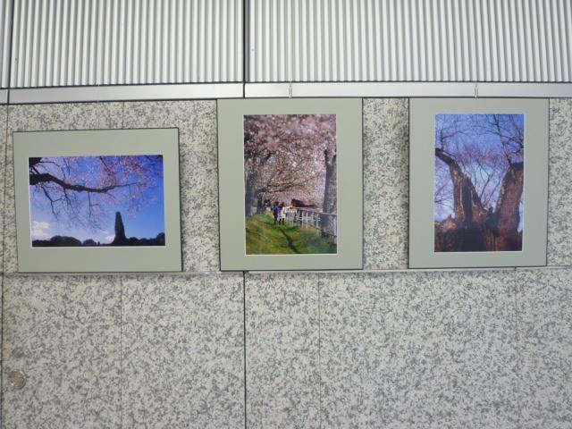 第1回写友「風」写真展 UMKテレビ宮崎ギャラリーで_a0043276_57410.jpg