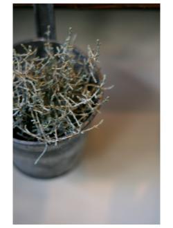 ・今週の鉢ものさん_b0209477_167141.jpg