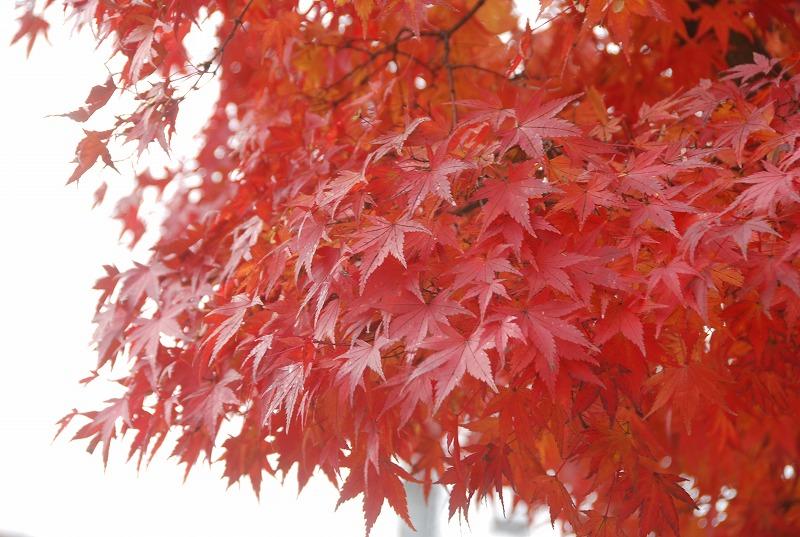 秋の軽井沢_c0187781_1223278.jpg