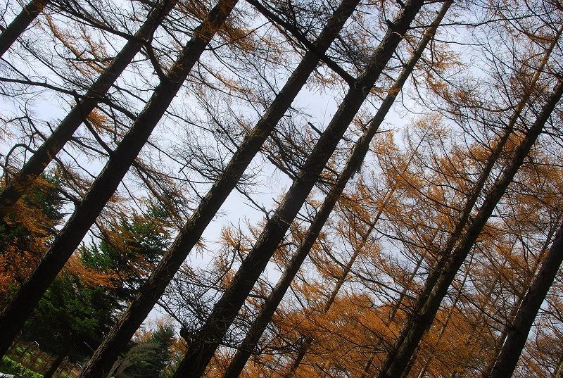 秋の軽井沢_c0187781_12301777.jpg