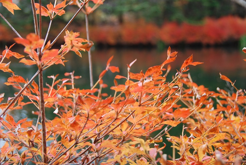 秋の軽井沢_c0187781_1305765.jpg