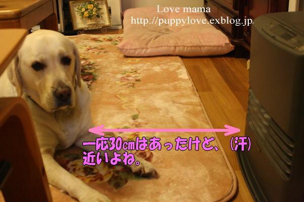 b0136683_20403750.jpg