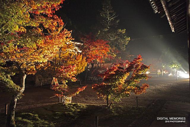宝福寺 紅葉 ライトアップ 2010_c0083985_7281291.jpg