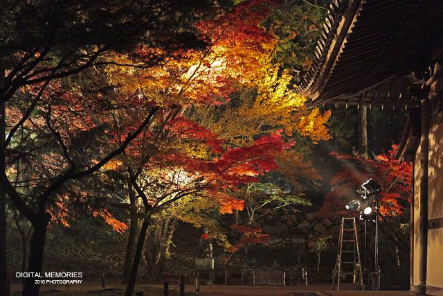 宝福寺 紅葉 ライトアップ 2010_c0083985_7321462.jpg