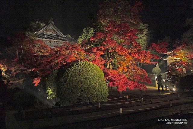 宝福寺 紅葉 ライトアップ 2010_c0083985_732506.jpg