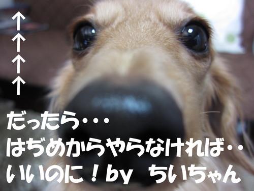 b0200291_1637563.jpg