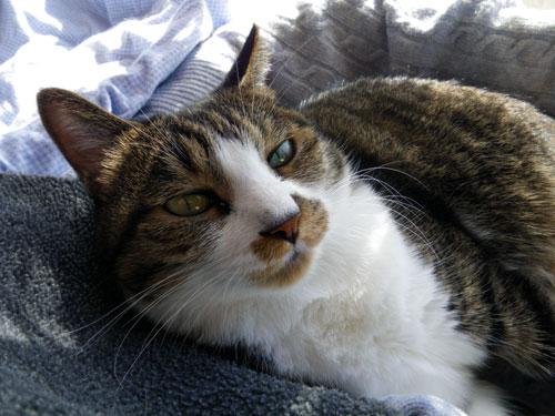 猫部屋、冬バージョンの準備中^^ (植物の冬越し)_a0136293_16462751.jpg
