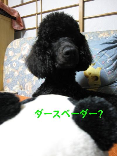 f0033598_2141767.jpg