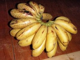 バナナの味くらべ_a0043520_2222983.jpg