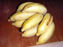 バナナの味くらべ_a0043520_2225698.jpg