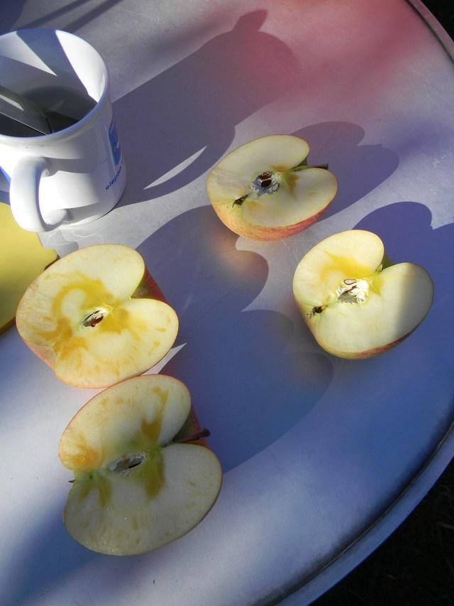 リンゴ農園_c0213220_22362391.jpg