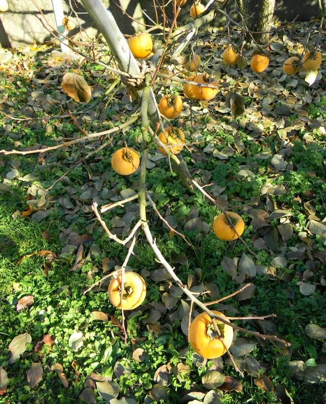 リンゴ農園_c0213220_22422231.jpg