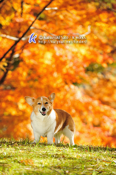 素晴らしい秋、みつけました!_d0102523_2146196.jpg