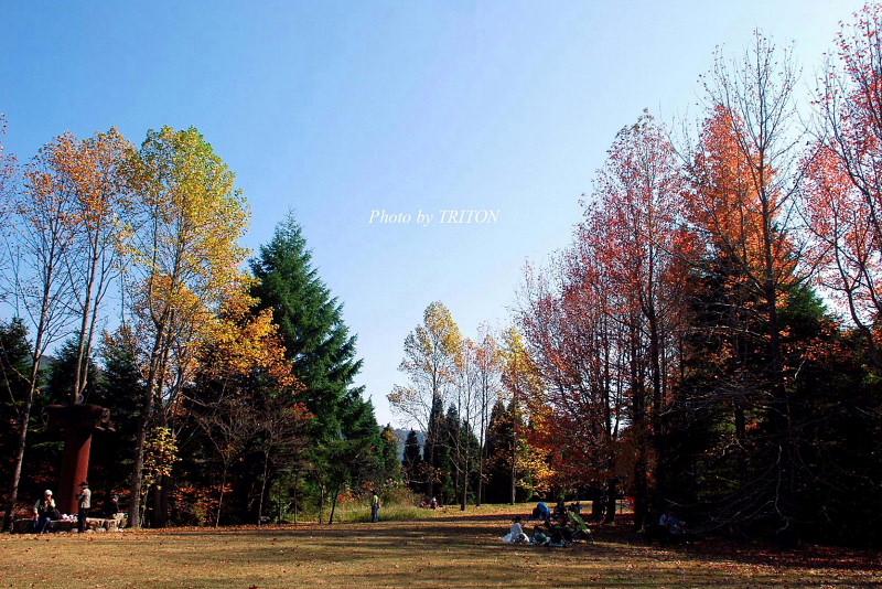 シアトルの森 ☆ 神戸市立森林植物園_c0179025_18422057.jpg