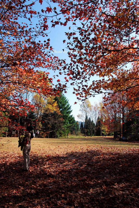 シアトルの森 ☆ 神戸市立森林植物園_c0179025_18452786.jpg