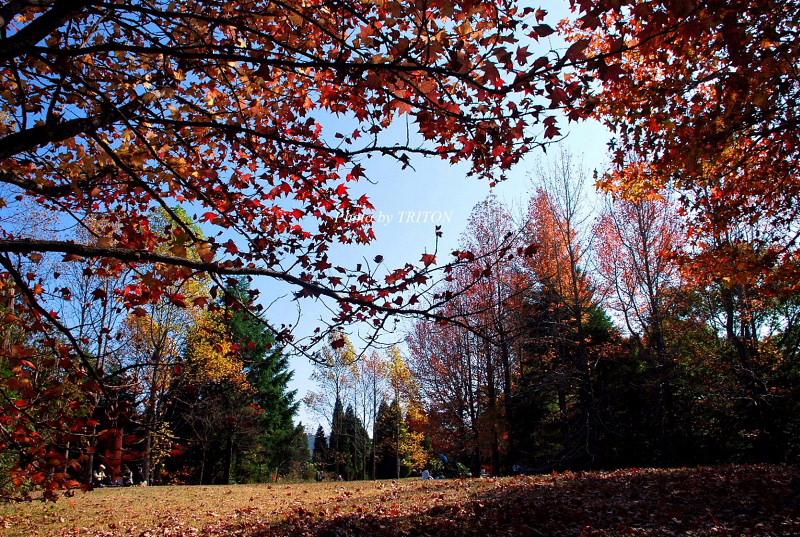 シアトルの森 ☆ 神戸市立森林植物園_c0179025_18501663.jpg