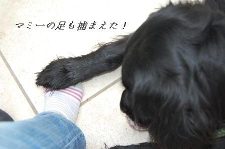 茹で鶏のニンジン和え&にんじんすーぷ☆_d0104926_037794.jpg