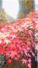 自然の美~紅葉狩り~_f0206741_0351651.jpg