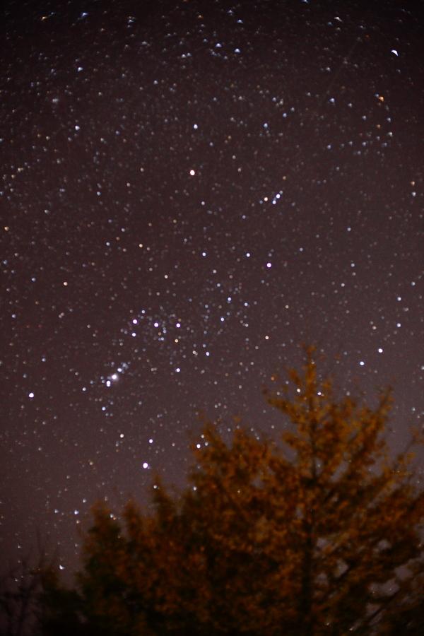 しし座流星群× オリオン座撮影と流れ星◎ (コンポジット合成、星空撮影)_b0157849_5183673.jpg