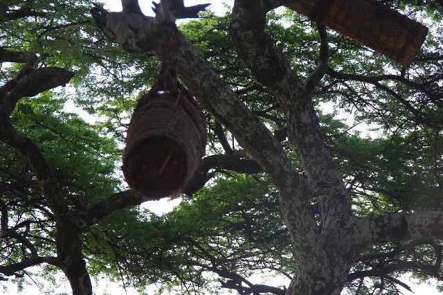 エチオピア(24) アカシアの樹と蜂蜜_c0011649_022258.jpg