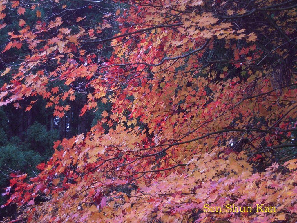 京都北山の秋_a0164068_11362286.jpg