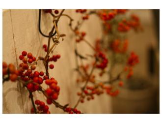 ・11月おはな教室の日①_b0209477_16322946.jpg
