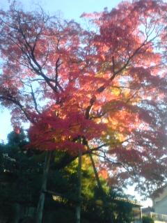 秋発見☆_a0045193_16573530.jpg