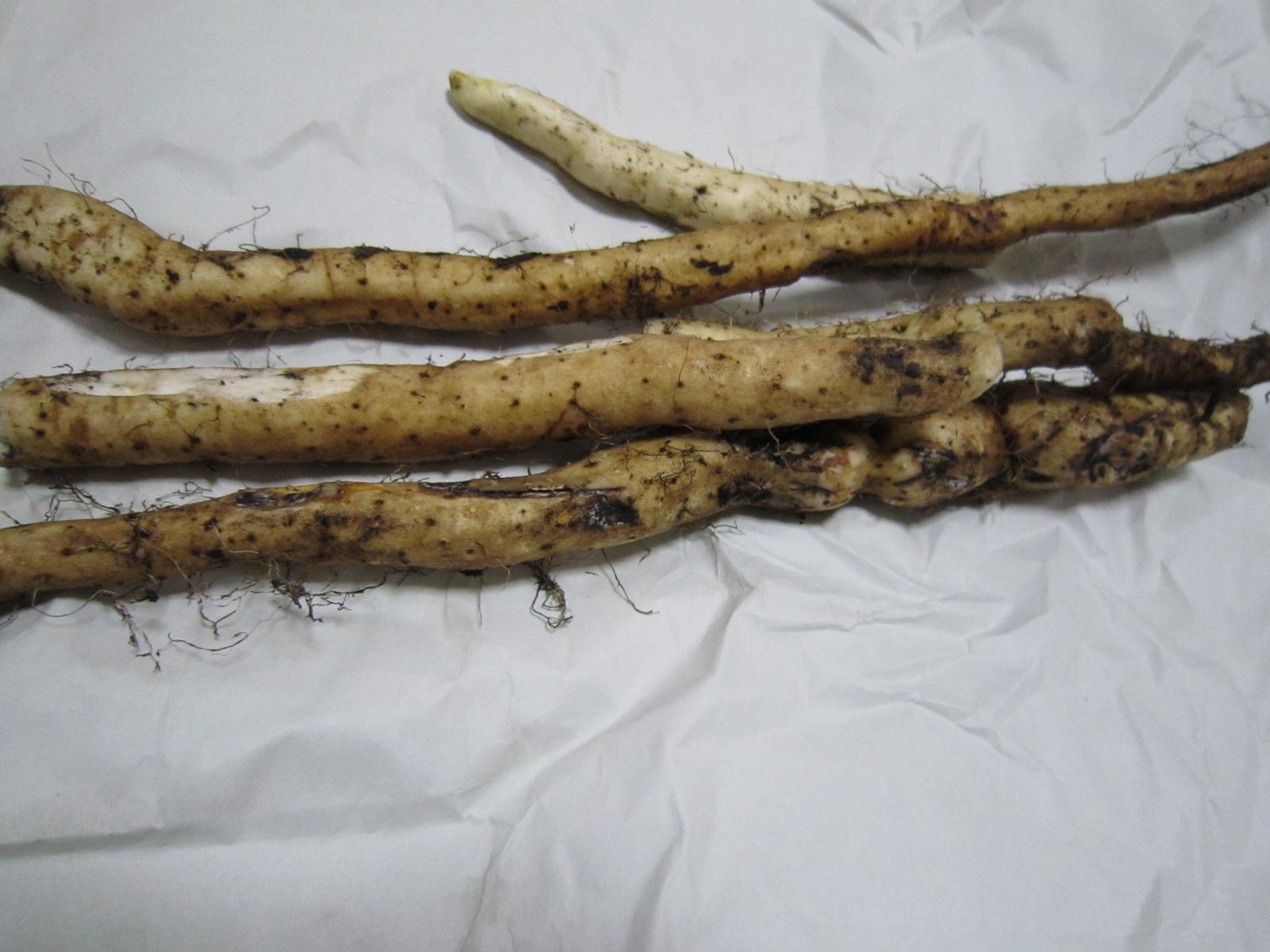 自然薯_f0204295_1822835.jpg