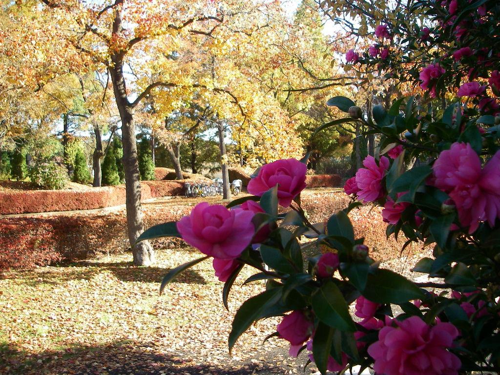 記念公園通信_b0172896_1412139.jpg