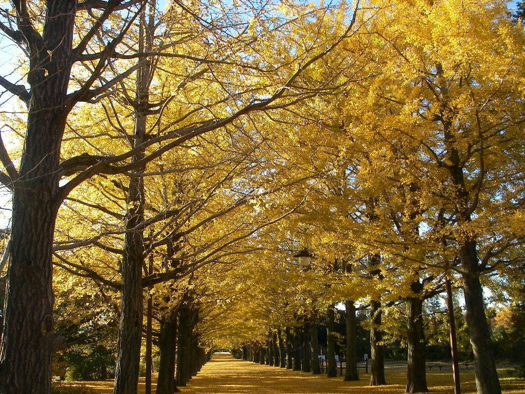 記念公園通信_b0172896_141615.jpg