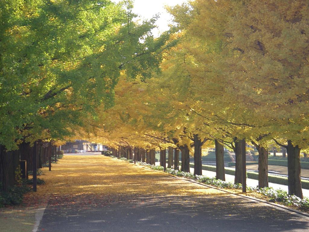 記念公園通信_b0172896_7243499.jpg
