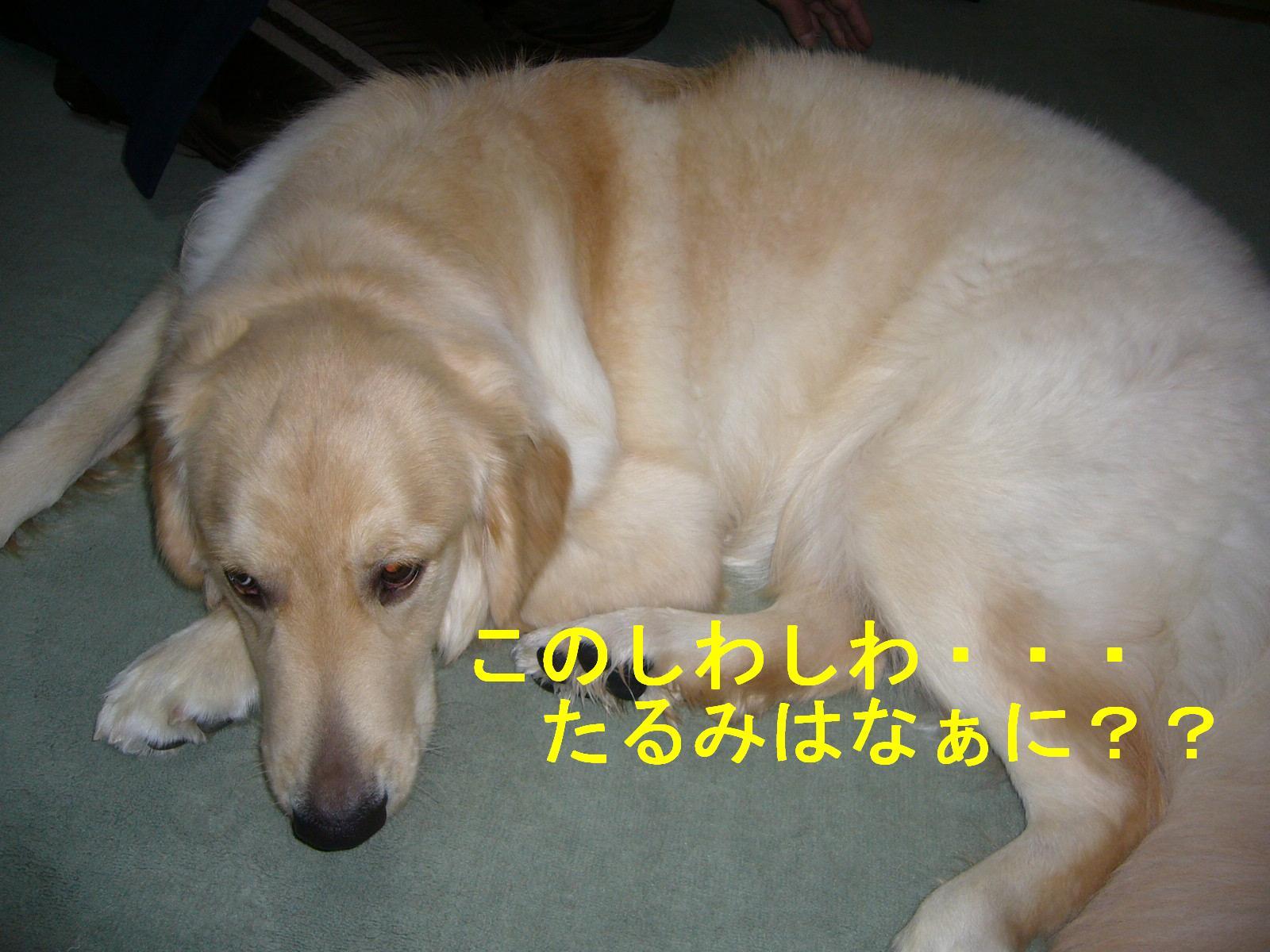 b0206300_16271948.jpg