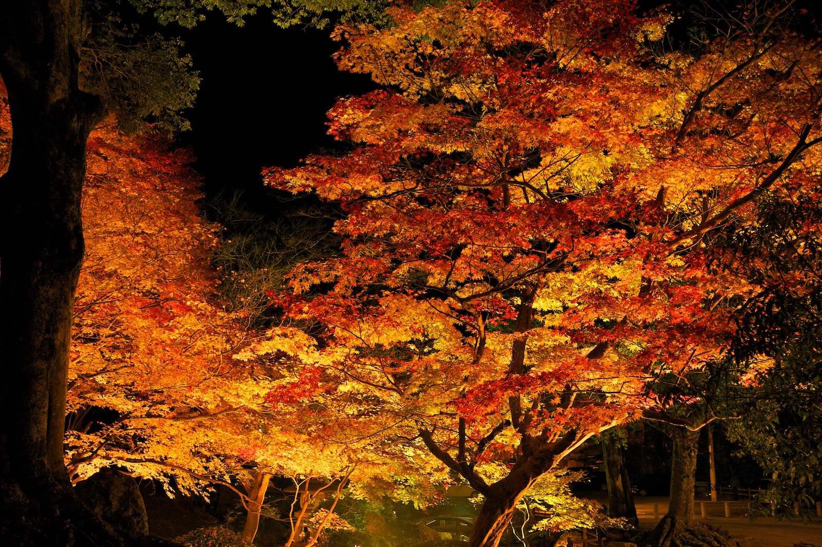 尾関山公園_f0231512_12242212.jpg