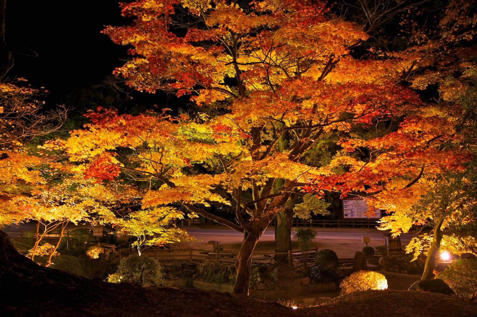 尾関山公園_f0231512_1224224.jpg